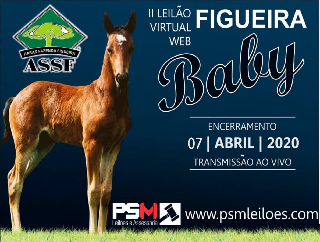 II LEILÃO VIRTUAL WEB FIGUEIRA BABY