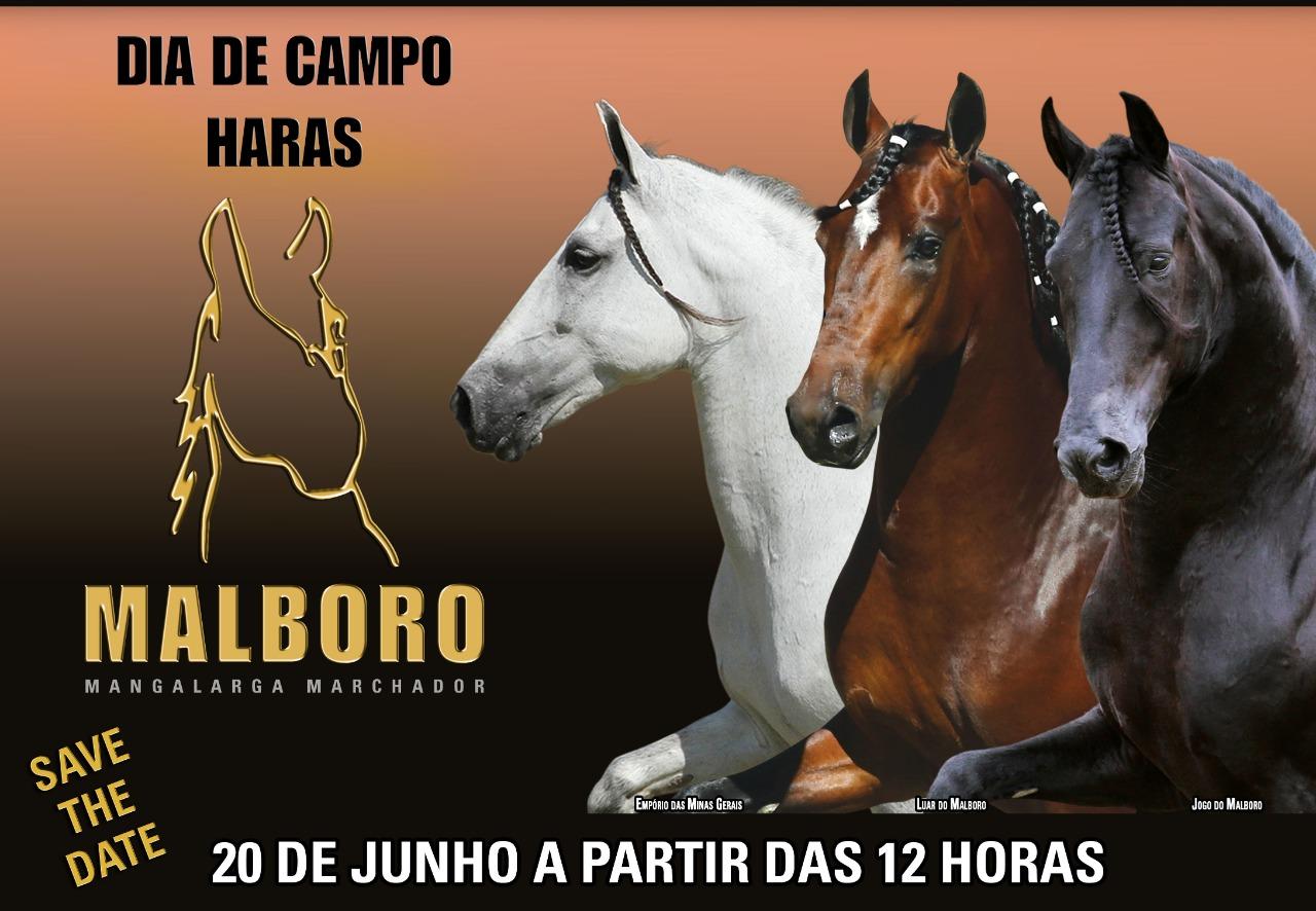 Banner Leilão