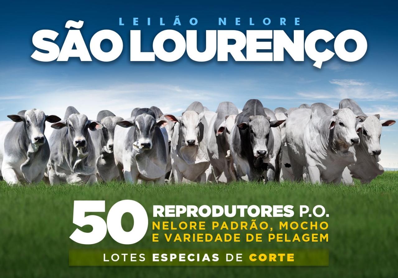 LEILÃO NELORE SÃO LOURENÇO