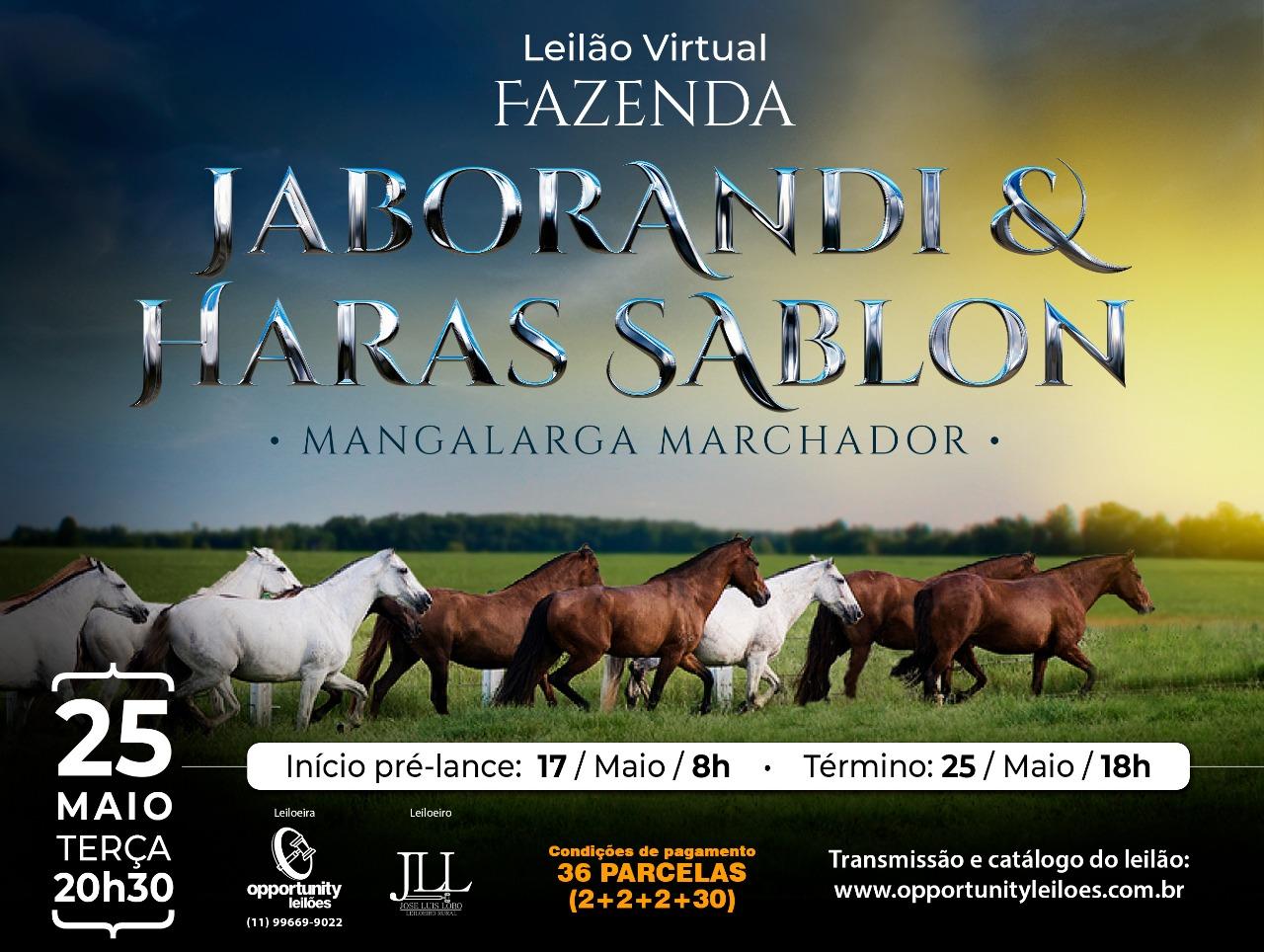 LEILÃO VIRTUAL - FAZENDA JABORANDI & HARAS SABLON