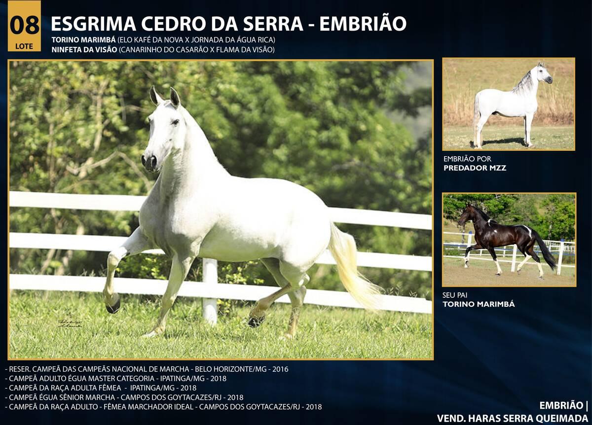 Foto ESGRIMA CEDRO DA SERRA