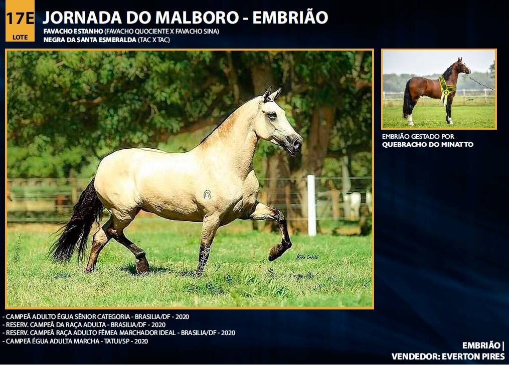 Foto JORNADA DO MALBORO