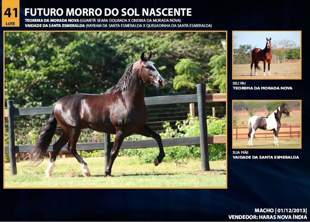 Foto FUTURO MORRO DO SOL NASCENTE