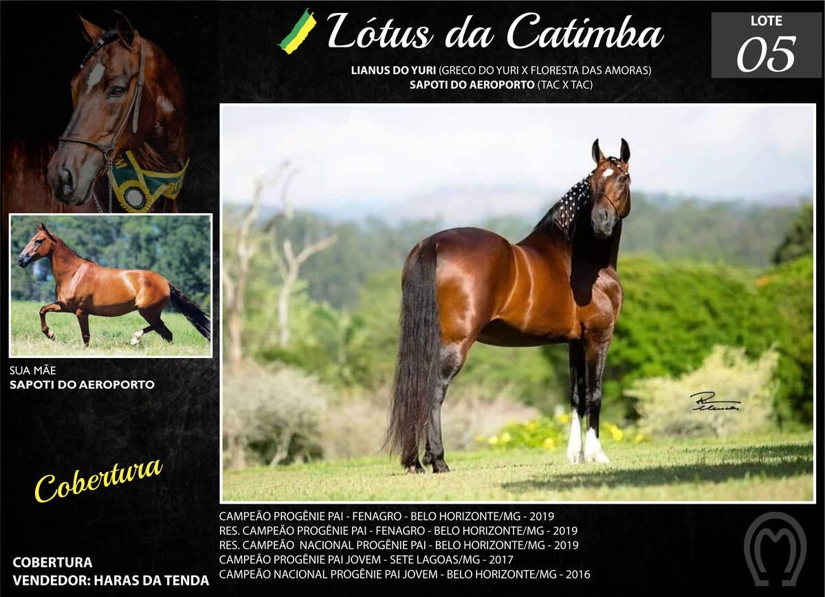 Foto LÓTUS DA CATIMBA