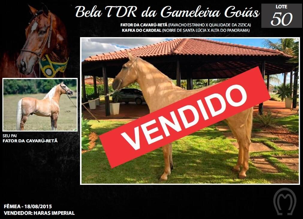 Foto BELA TDR DA GAMELEIRA GOIÁS