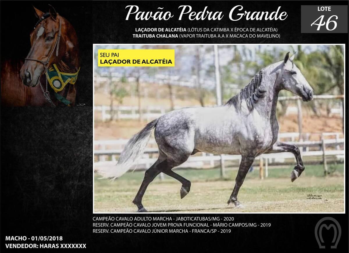 Foto PAVAO PEDRA GRANDE