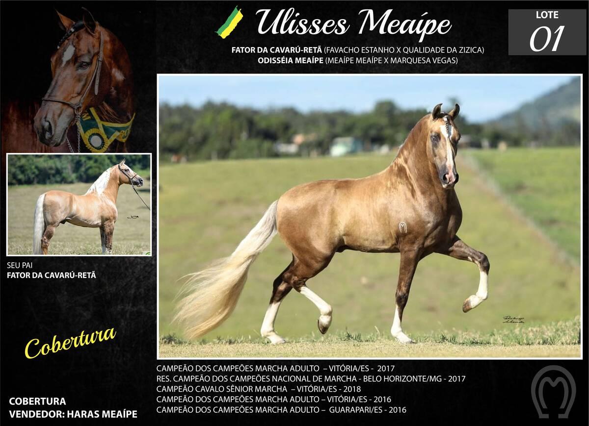 Foto ULISSES MEAÍPE