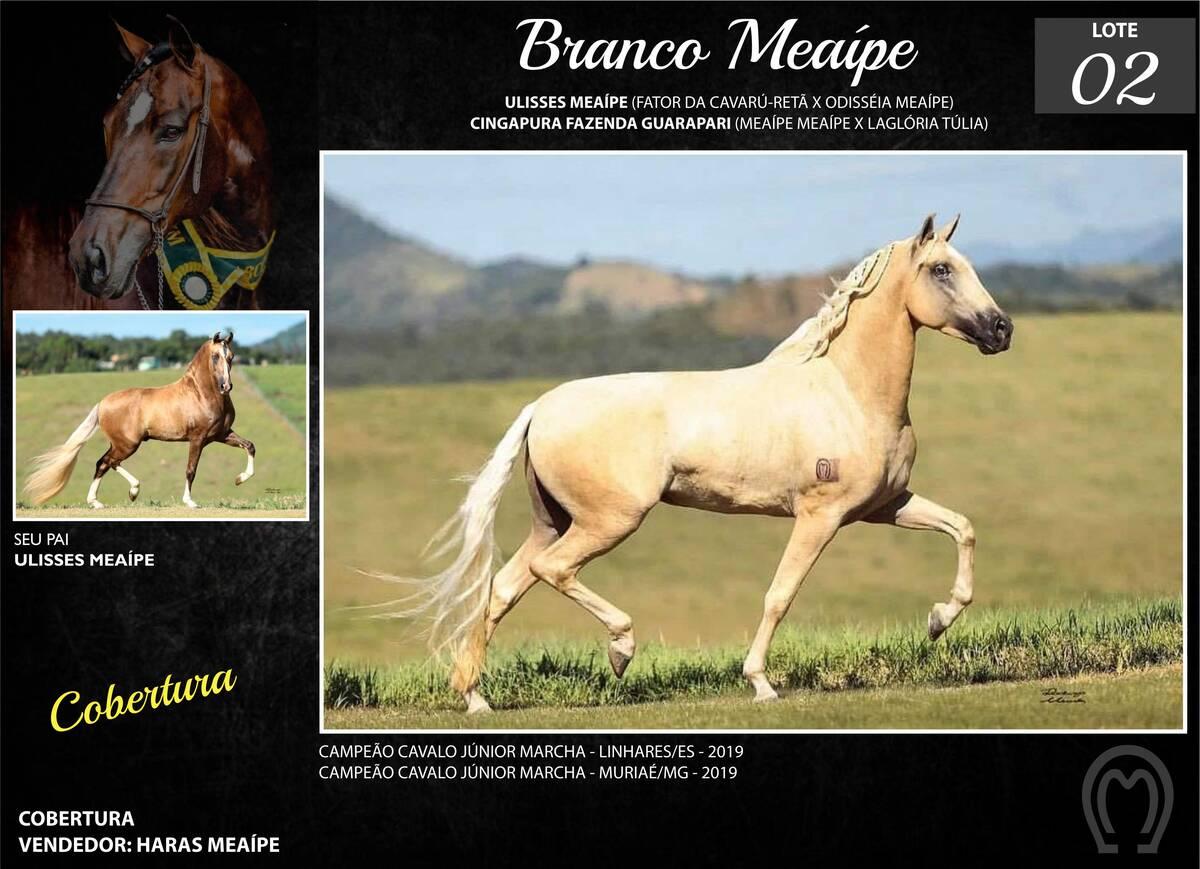 Foto BRANCO MEAÍPE