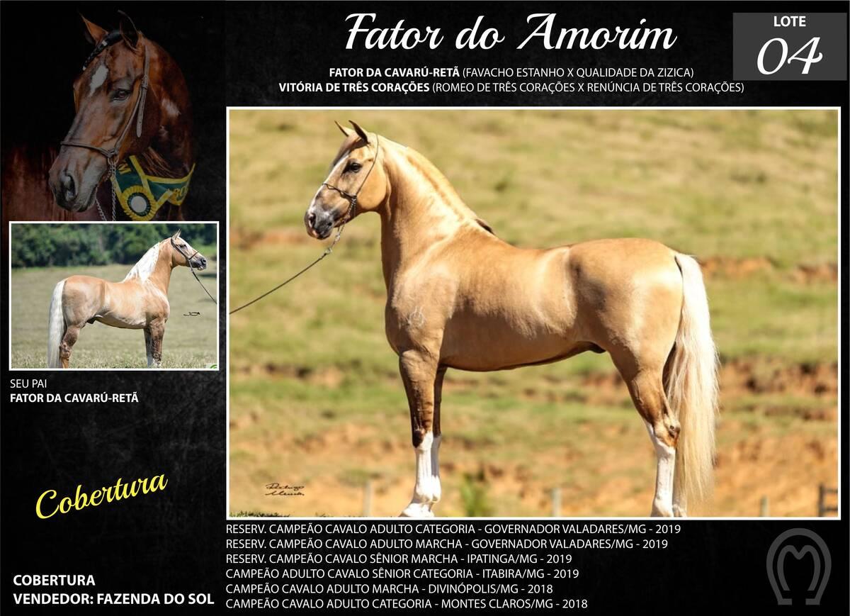 Foto FATOR DO AMORIM