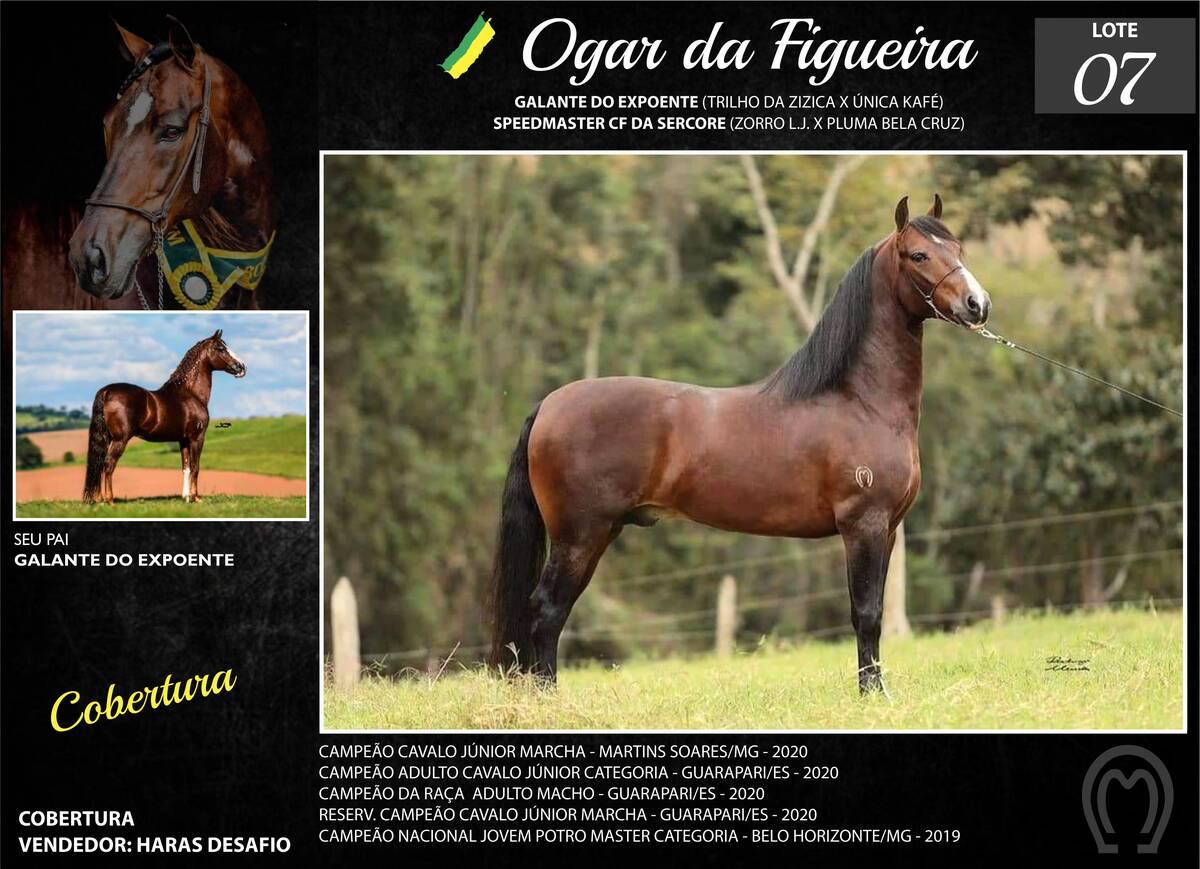 Foto OGAR DA FIGUEIRA
