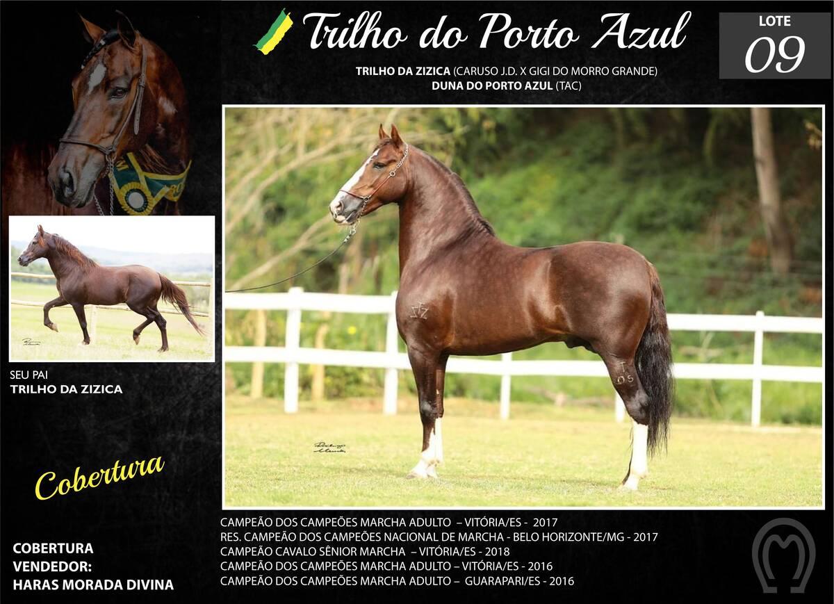 Foto TRILHO DO PORTO AZUL