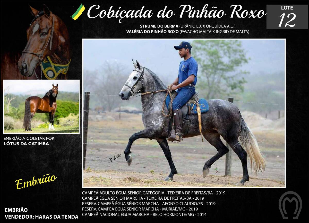 Foto COBIÇADA DO PINHÃO ROXO