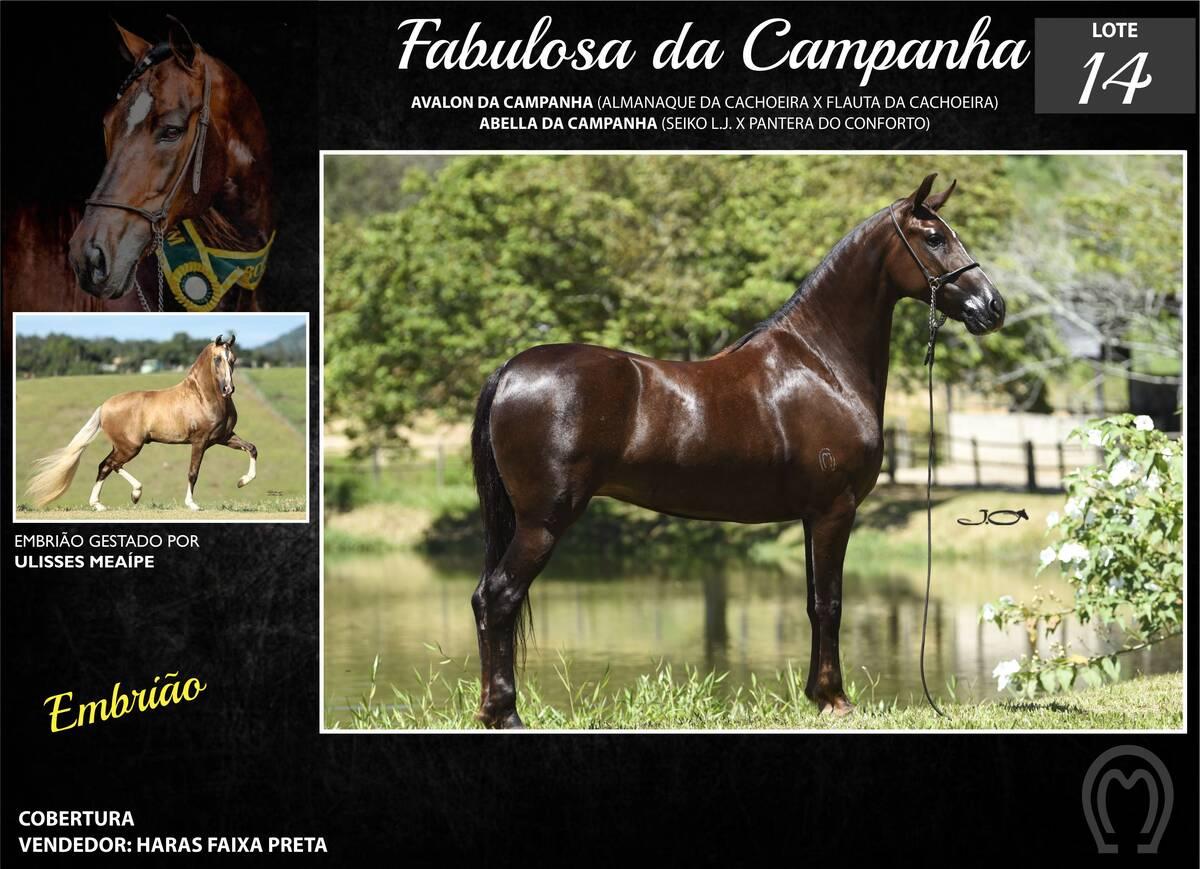 Foto FABULOSA DA CAMPANHA