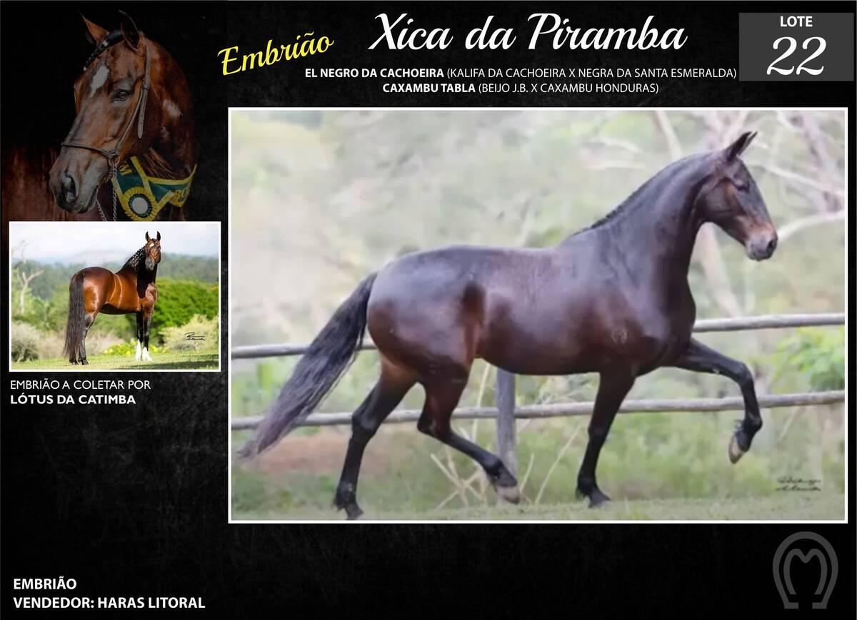Foto XICA DA PIRAMBA