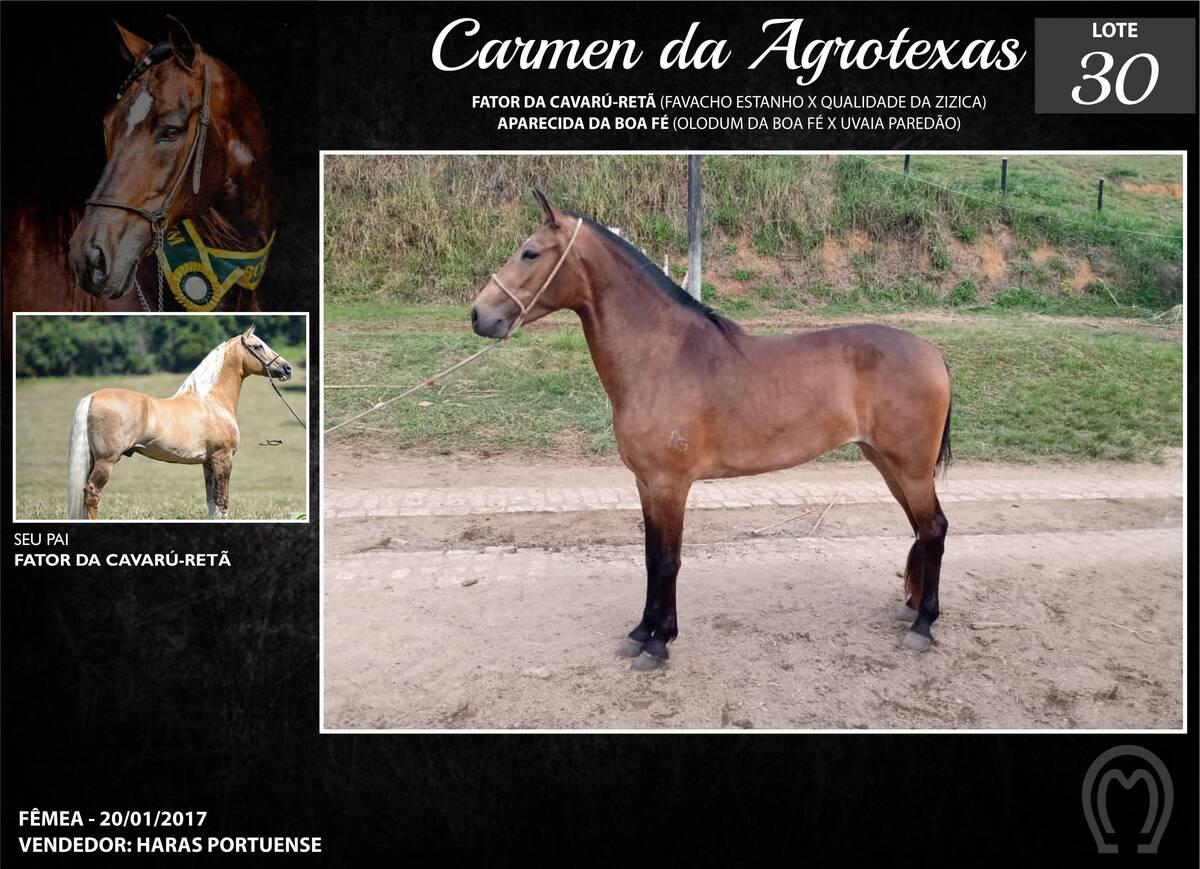Foto CARMEN DA AGROTEXAS