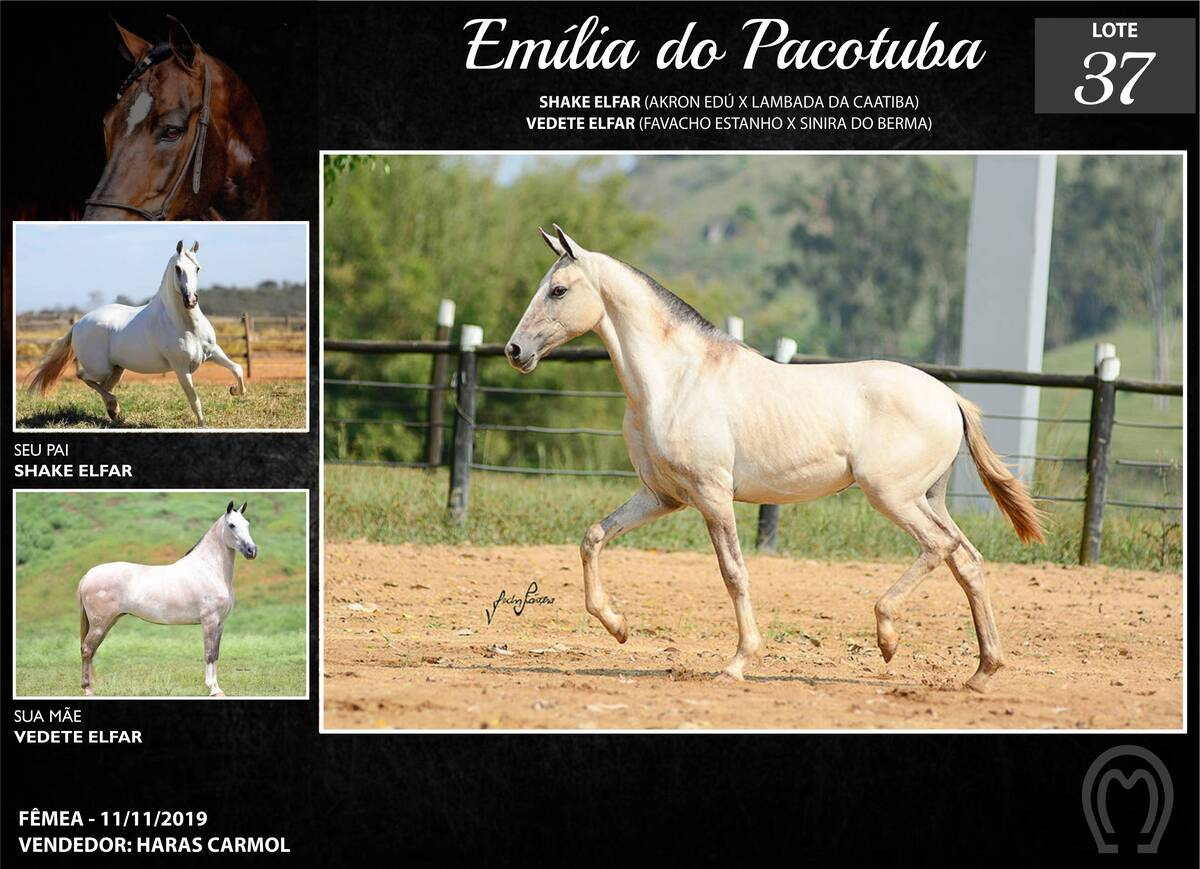 Foto EMÍLIA DO PACOTUBA