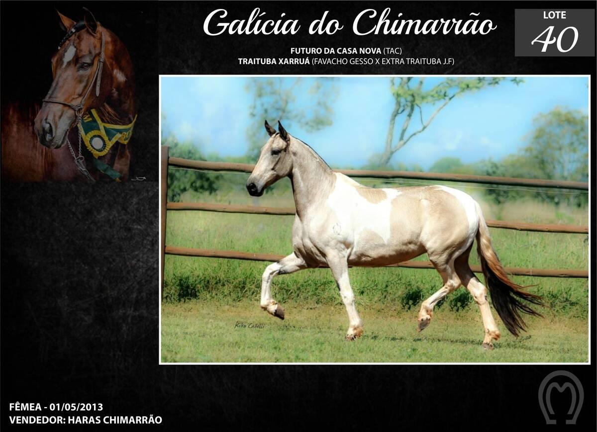 Foto GALÍCIA DO CHIMARRÃO